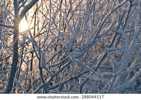 winter frozen branches - stock photo