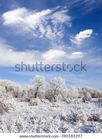 Winter frozen forest - stock photo