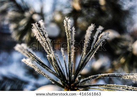 Winter in all its glory - stock photo