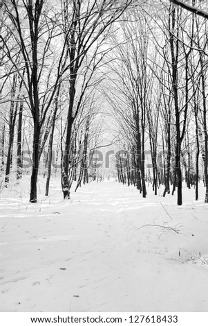 Winter in the woods - stock photo