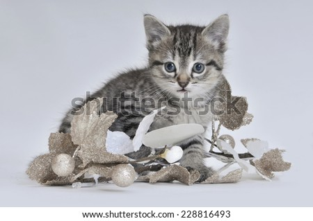 winter kitten - stock photo