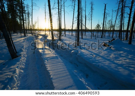 Winter landscape at sunset in the woods. Tracks from the Rover in the snow. - stock photo