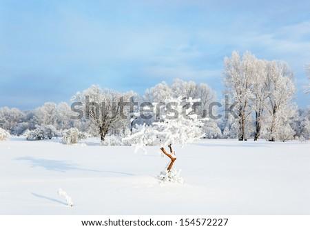 Winter landscape. Cold winter morning - stock photo