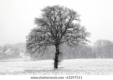 winter landscape during heavy snowstorm. - stock photo