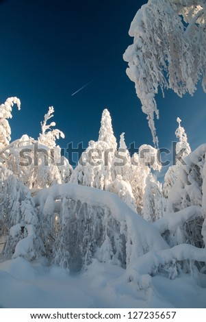 Winter Landscape. Frosty day in the woods. Winter's Tale. - stock photo
