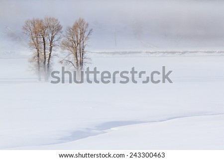 Winter landscape in fog, Yellowstone National Park. - stock photo