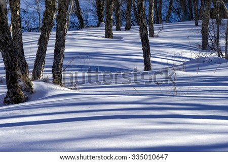 Winter landscape in forest  - stock photo