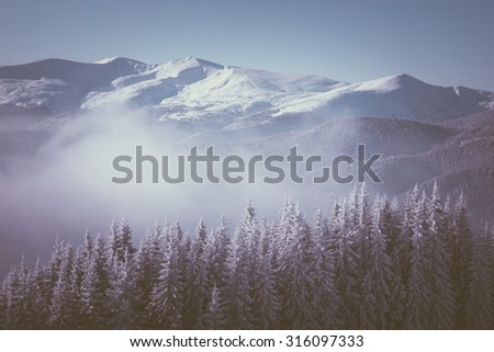 Winter landscape in the mountains. Color toning. Low contrast - stock photo