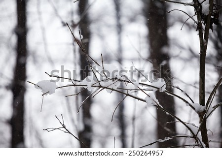 Winter landscape in the park  - stock photo