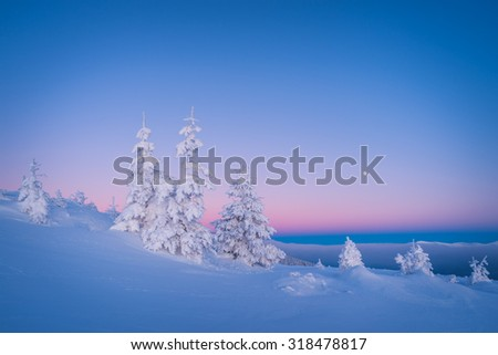 Winter landscape. Morning twilight. Frosty morning. Fir trees under the snow - stock photo