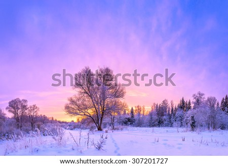 winter landscape panorama with sunset and the  forest and snow - stock photo