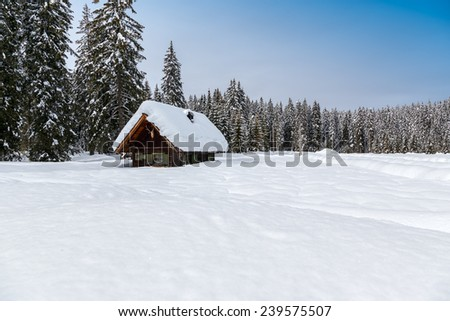 Winter landscape,pines and cottage covered with snow, Pokljuka, Slovenia - stock photo