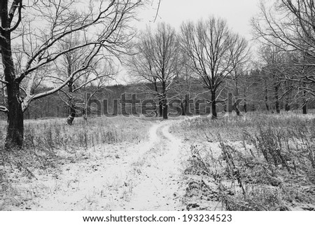 winter landscape  the first snow in field near forest on a cloudy day - stock photo