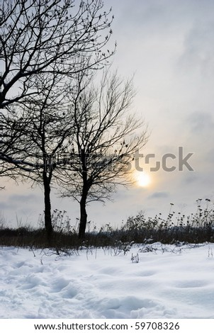 Winter landscape. Tree, weed, snow and sun. - stock photo