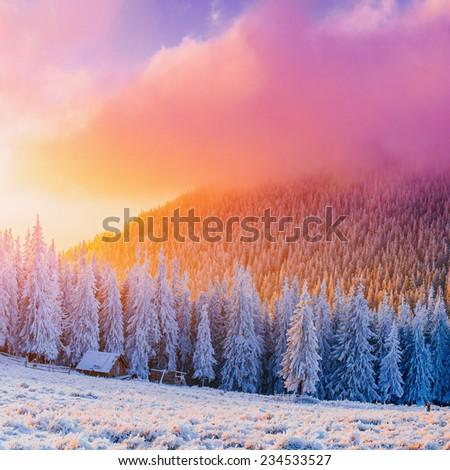 winter landscape trees in frost - stock photo