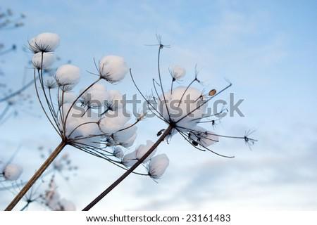 Winter landscape.Winter scene - stock photo