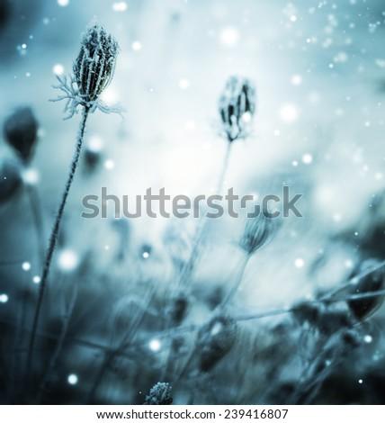 Winter landscape.Winter scene .Frozen flower - stock photo