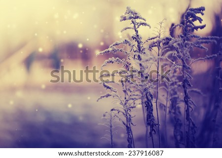 Winter landscape.Winter scene .Frozenned flower  - stock photo