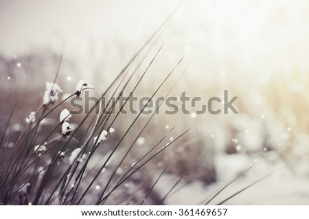 Winter landscape.Winter scene .Frozenned grass/ selective focus - stock photo