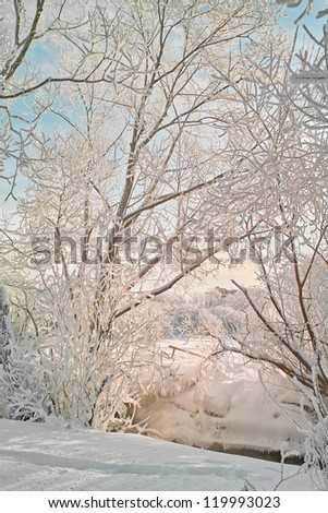 Winter landscape. Winter wood covered with ice. Russian winter - stock photo