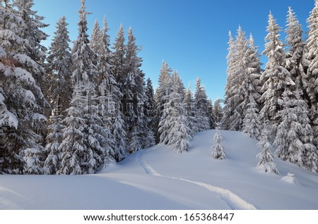 Winter landscape with a path in the snow in the woods. Coniferous forest in a mountain valley. Carpathians, Ukraine - stock photo