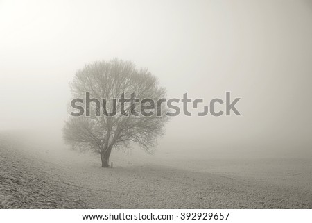 Winter landscape with a tree and snow in the fog - stock photo