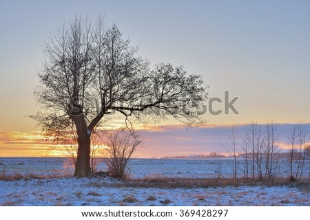 Winter landscape with a tree farm - stock photo
