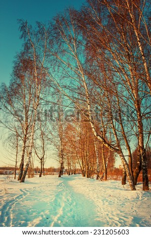 Winter landscape with birch forest - stock photo