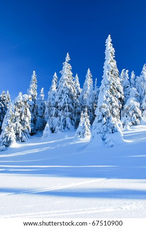 Winter landscape with coniferous forests and clear blue sky - stock photo