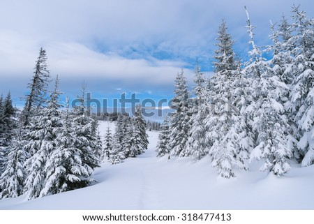 Winter landscape with footpath in the snow. Fir forest - stock photo