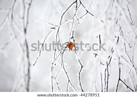 Winter landscape with frosty trees and bushes - stock photo