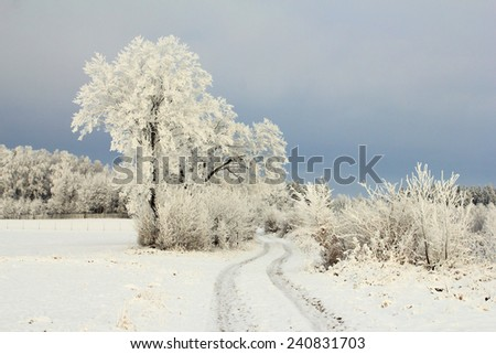 Winter landscape with frosty trees and rural road - stock photo