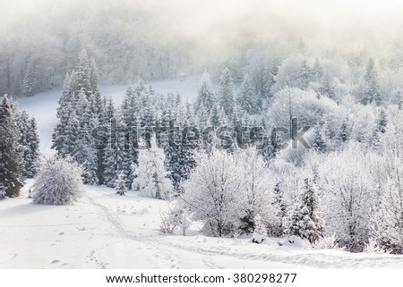 Winter landscape with lots of snow and trees covered with snow  - stock photo