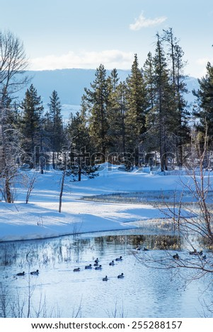 Winter landscape with mountains and pine forests, ducks. Wyoming, Grand Teton National Park - stock photo