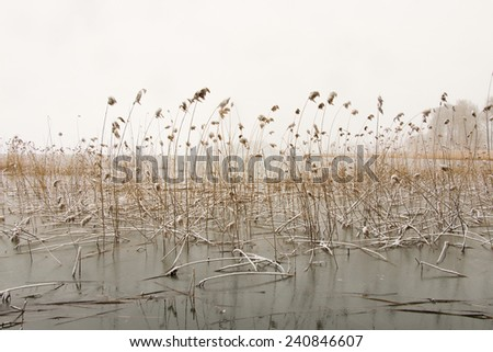 Winter landscape with reeds in Swedish lake - stock photo