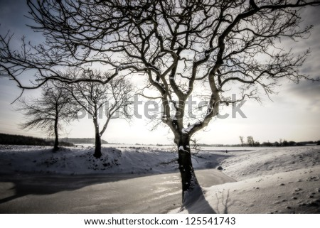 Winter landscape with snow and trees in Denmark. - stock photo
