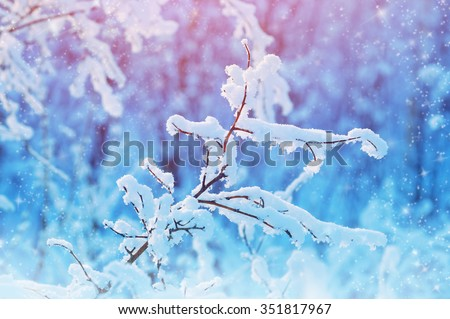 Winter landscape with snow-covered branches in the forest - stock photo
