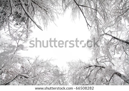 Winter landscape with snow covered trees - stock photo