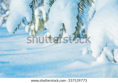 Winter landscape with the pine branches covered with snow - stock photo