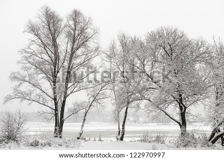 Winter landscape with trees and falling snow - stock photo
