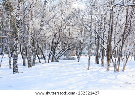 Winter landscape with trees and snow in city park.  - stock photo