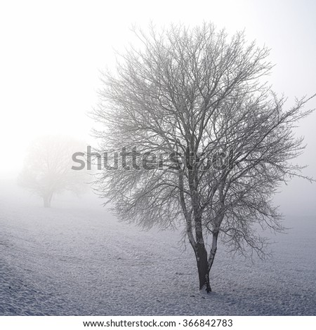 Winter landscape with trees in fog - stock photo