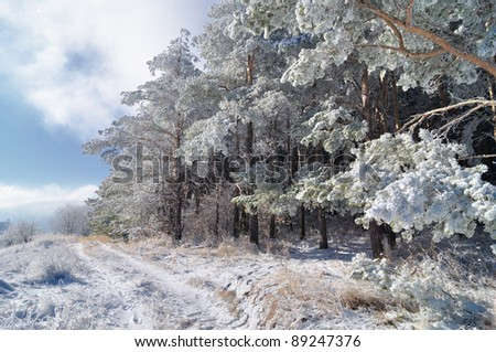 Winter lane on the edge of snowy pine forest - stock photo
