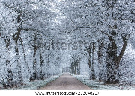 Winter lane with trees and snow - stock photo