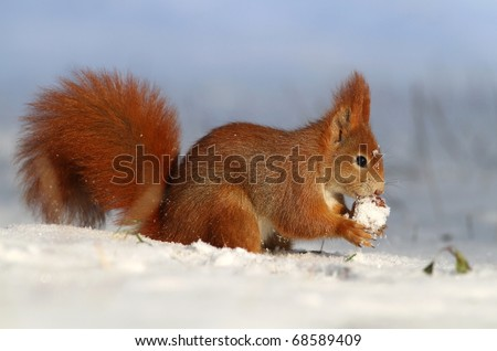 Winter lunch - stock photo