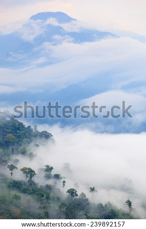 Winter Mist forest, trees from top of mountain - stock photo