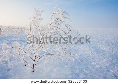 winter morning - stock photo
