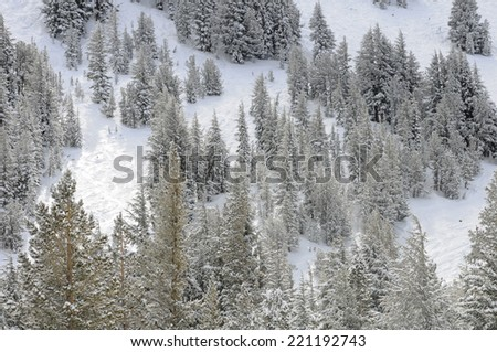 Winter mountainside - stock photo