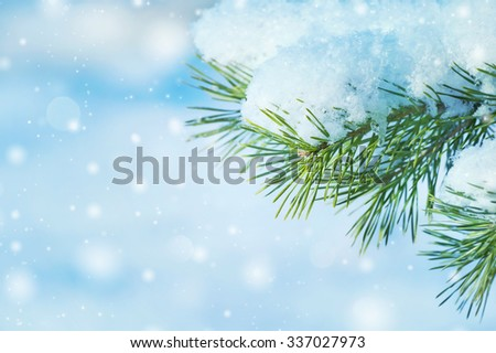 Winter natural background with a snow-covered pine branch - stock photo