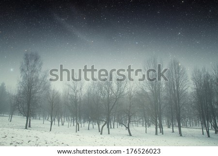 winter night in the park. Elements of this image furnished by NASA - stock photo